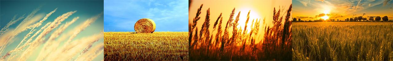 Tarapada Modern Rice Mill Banner