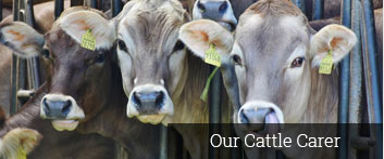Our Cattle Carer