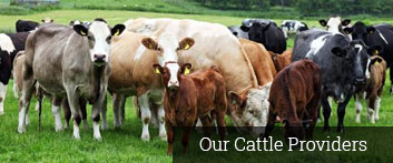 Our Cattle Providers