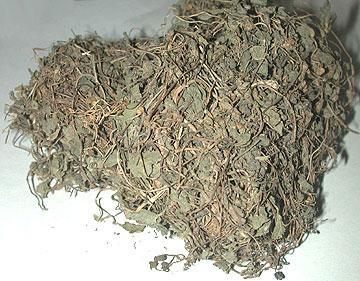 Gotukola (Centella Asiatica)