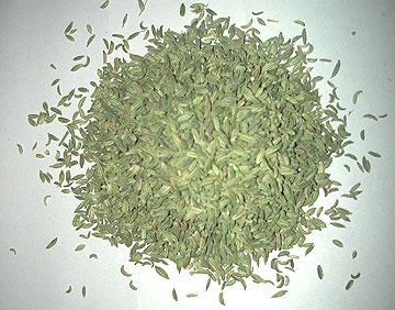 Fennel Seed (Foeniculum Vulgare)