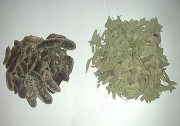 Senna (Cassia Angustifolia)