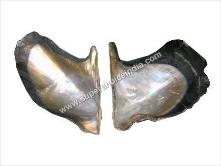 Raw Abalone Shell