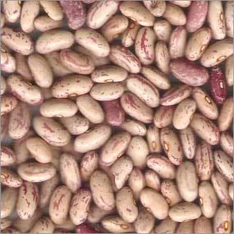 Kidney Bean (chitra)