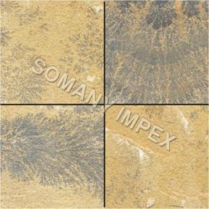 Fossils Sandstones