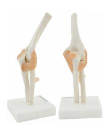 Joint Models