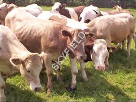 Animal Feed Blocks