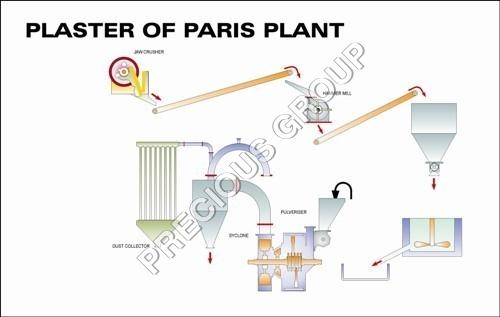 Plaster of Paris Plant
