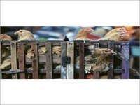Veterinary APIs/Bulk Drugs