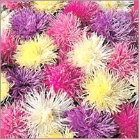 Flower & Vegetable Seeds