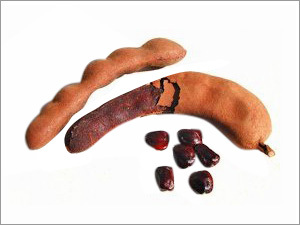 Tamarind Gum & Derivatives of Tamarind Gum