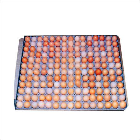 Plastic Egg Setting Tray (180 Eggs)