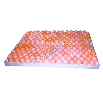 Plastic Egg Setting Tray