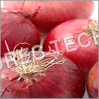Red Indian Onions