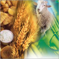 Agro Industry Chemicals