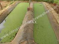 Algae Pond Liner