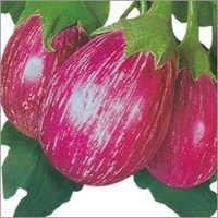 Hybrid Egg Plant Seed