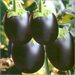 Egg Plant Seeds