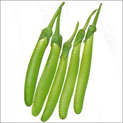Hybrid Plant Seeds