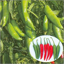 Hybrid  Pepper Seeds