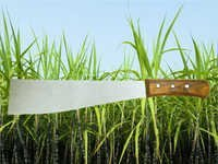 Sugar Cane Knife With Handle