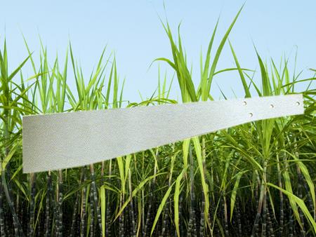 Sugarcane Knife without Handle