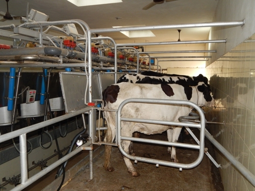 Goat Milking Parlors
