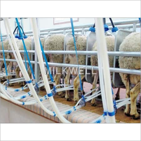 Sheep Milking Parlors