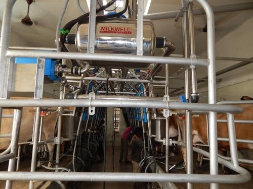 Herringbone Milking Parlour