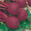Beet Root Bolt Hardy