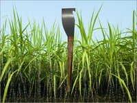 Cutlasses Sugarcane Knife