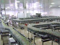 MS Multiple Conveyor