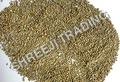 Green Millet