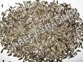 Sunflower Oil Seed