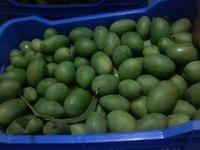 Fruit Ripening Chambers