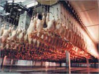 Chicken Slaughter Equipment