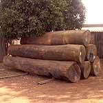 Sal Timber
