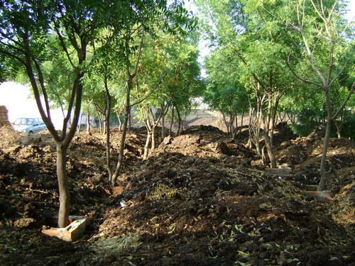 Vermi Compost Organic Manure