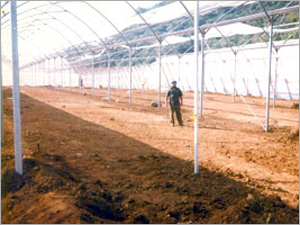Geo Construction Shed Net