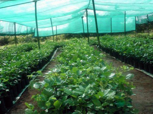 Nursery shed nets