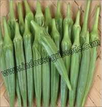 Okra Bhindi Seeds