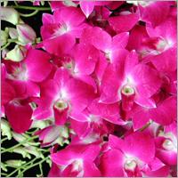 Flowers Fragrance