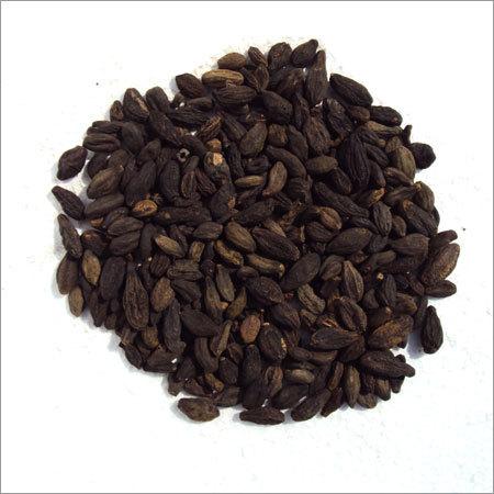 Small Terminalia Chebula Seeds