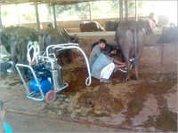 Buffalo Milking Machine