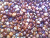 Poultry Seeds