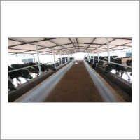 Our Cattle Farm