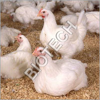 Broiler Balancer Feed