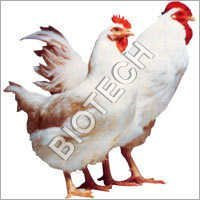 Poultry Feed Supplements Organic
