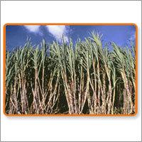 Industrial Sugar Process Chemicals