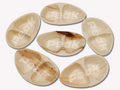 Areca Oval-Twin Plates